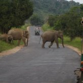 Road Trip: Sri Lanka provides amazing roadside views and sweet surprises!