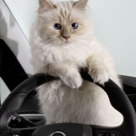 http://'Pets+Cars'%20photo%20contest%20should%20produce%20some%20real%20furry%20fun