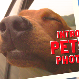 Your photos have Santander Pets+Cars photo contest cruising along