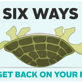 http://The%20connection%20between%20used%20cars,%20turtles%20and%20your%20monthly%20loan%20payment