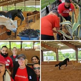 No horseplay here – Santander Consumer USA associates volunteer to make a difference